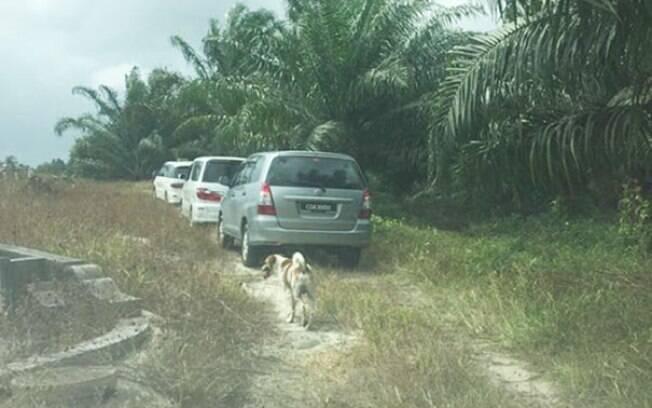 Cão segue o funeral da tutora por quilômetros e mostra lealdade