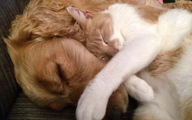 Amizade entre gatinho e cachorro é possível