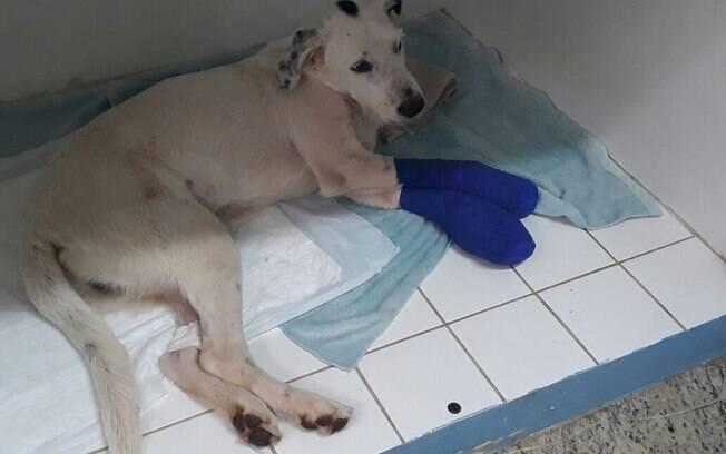 Pingo agora está sob cuidados veterinários