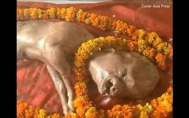 O bezerro, que nasceu na Índia, possui traços faciais que lembram as expressões humanas, e por conta disso, há quem acredite que ele é a reencarnação do deus hindu Vishnu