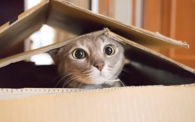 O gato pode se manter escondido durante um tempo após a mudança de casa