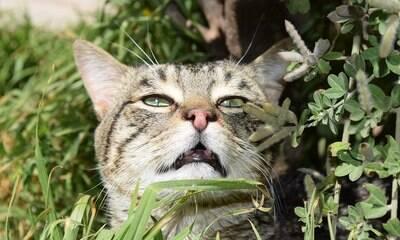 Banana, pinho e café: 10 cheiros que os gatos mais odeiam