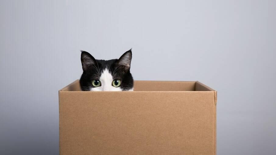 Caixas de papelão podem servir de esconderijos e brinquedos para os gatos