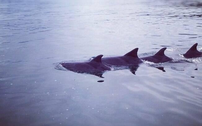 Golfinhos em frente à casa de Luciano Huck em Angra dos Reis