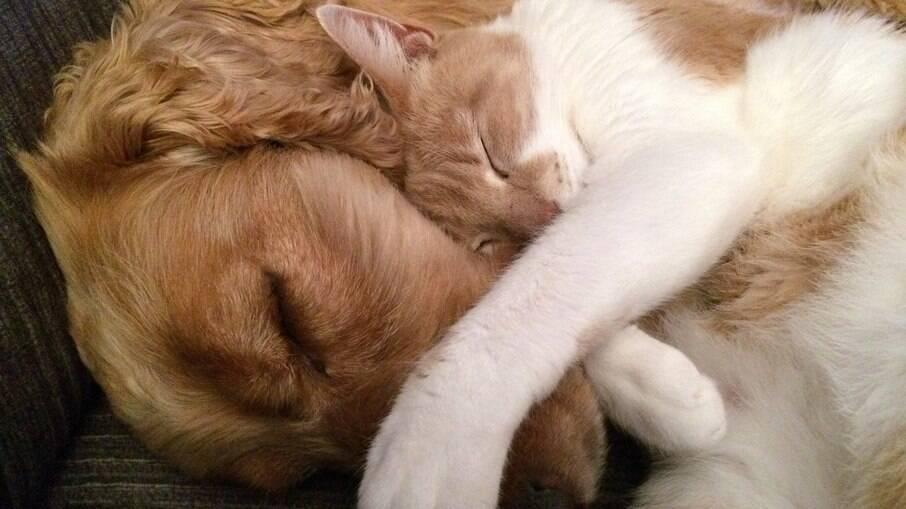 Como manter uma boa convivência entre cães e gatos
