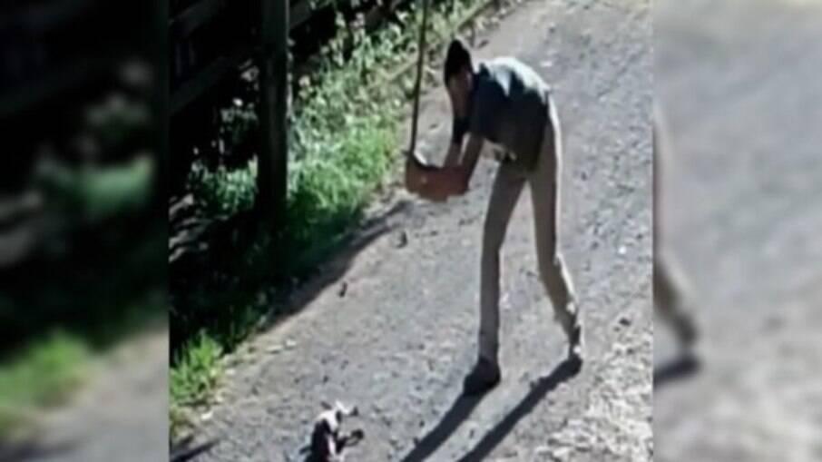 Rapaz é preso por matar cachorro a pauladas