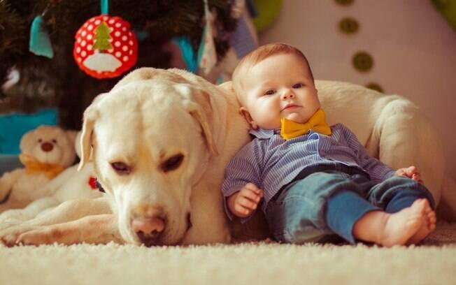 Veja dicas importantes e prepare o seu cãozinho antes da chegada de um bebê