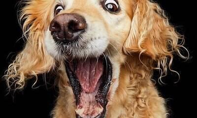 Fotógrafa capta expressões faciais dos cães com petiscos