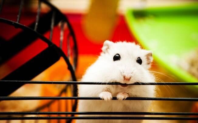Existem várias razões que levam um roedor a fazer isso, como mudanças de ambiente, doenças, má alimentação, entre outros