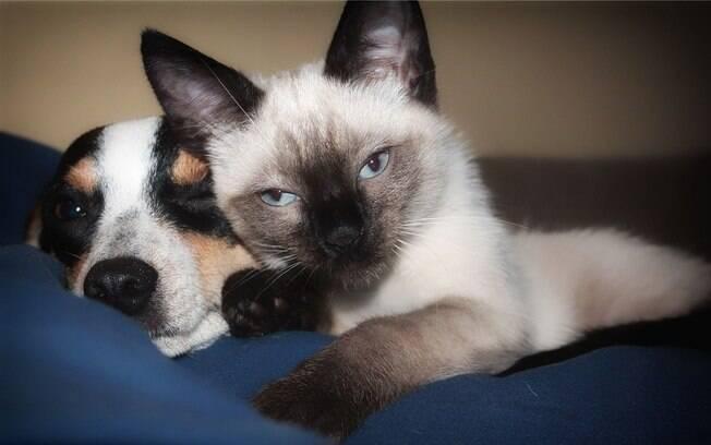 A administração do vermífugo em cães e gatos se inicia na fase filhote