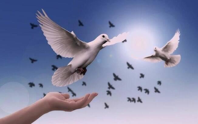Dia Mundial da Paz: palavras para meditar e ter serenidade