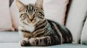 Sinais felinos: o que os gatos nos dizem?