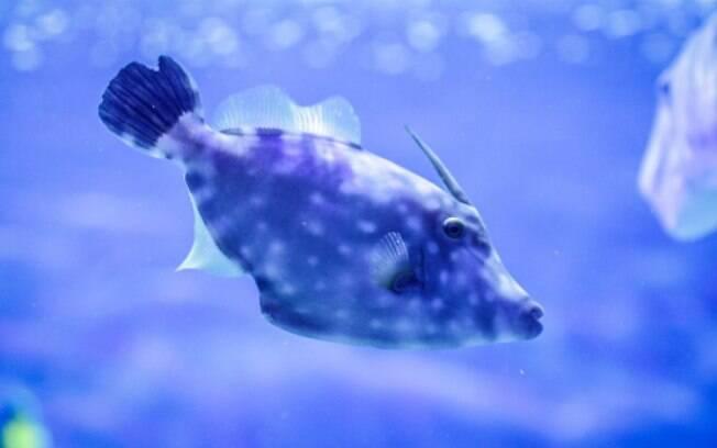 O Aqua Rio é o maior aquário do Brasil e também da América Latina