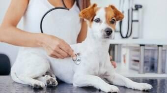 Sopro no coração pode trazer doenças mais graves para seu cão