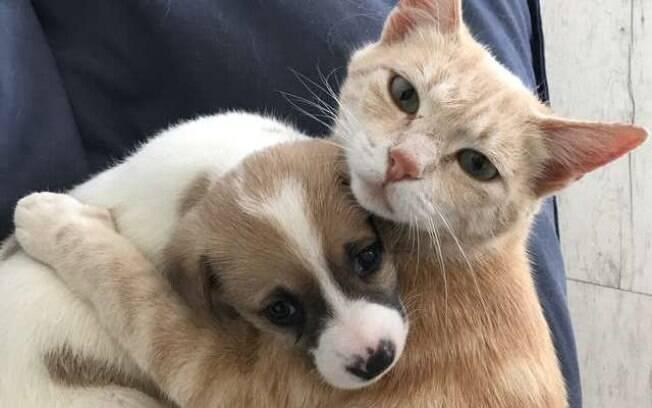 Gata e filhote de cachorro adotado por ela
