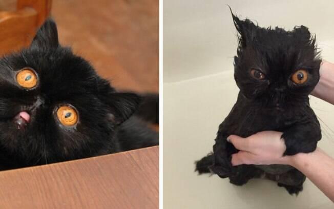 Outro gato pretinho.