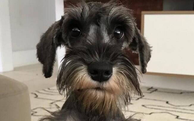 Afonso, cachorro de Anitta