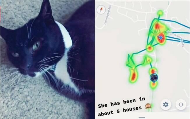 Detalhe da gatinha Jagger com sua coleira com GPS e o caminho que ela percorreu em um dia