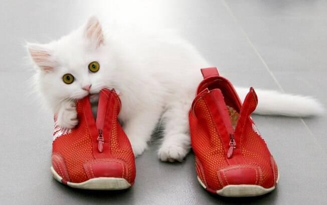 As causas da pica são incertas, pois variam de gato para gato e são difíceis de serem definidas com precisão