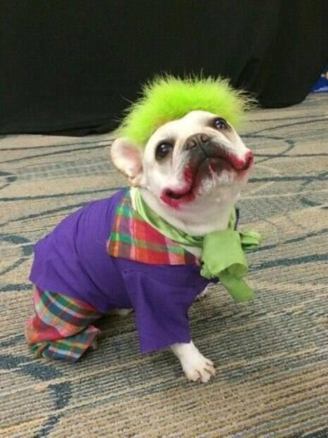 Carnaval está chegando! Não deixe seu pet de fora e confira as melhores fantasias para cachorro