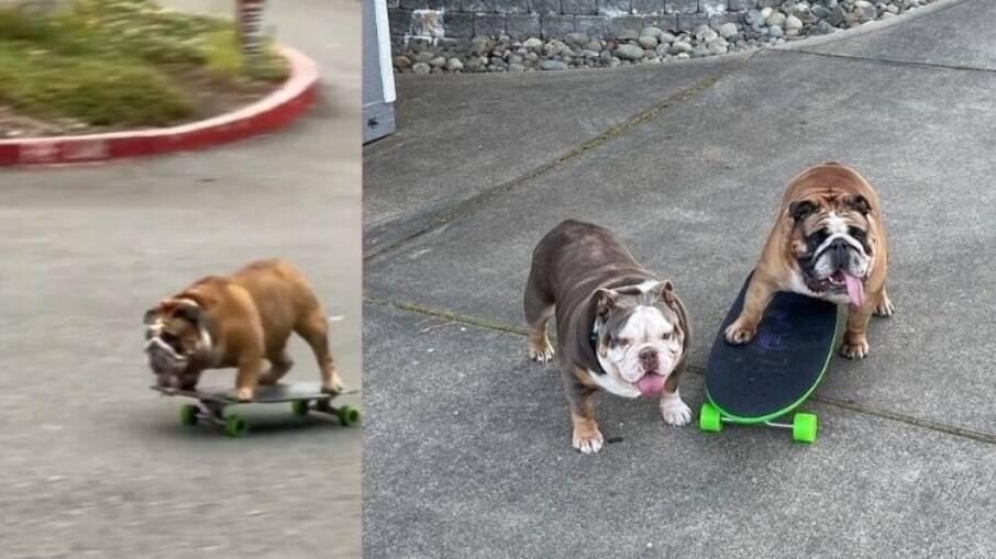 Chowder é um Bulldog que adora andar de skate