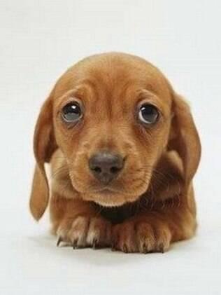 A ansiedade de separação é um problema que atinge muitos cães