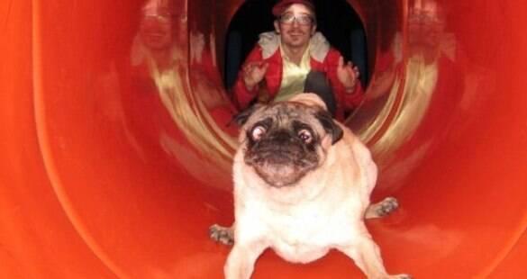 8 imagens de cachorros engraçados para você rir até amanhã