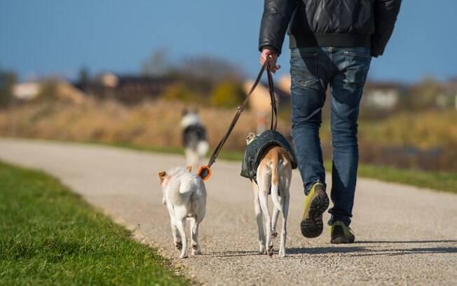 Dog walker é o profissional que leva cães para passear quando o dono não pode