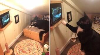 Gato ganha quarto de luxo com TV que só mostra vídeos de pássaros