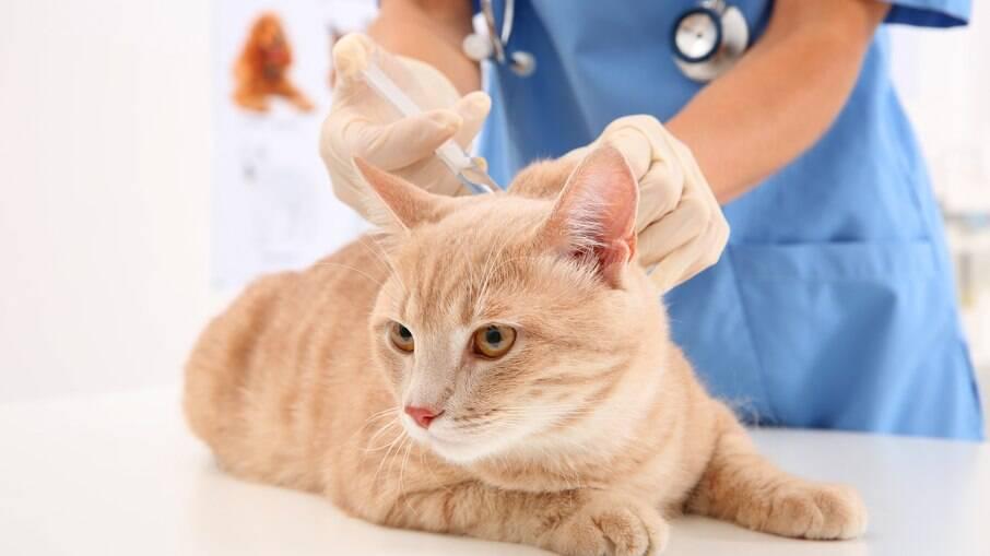 Vacinas para gatos são muito importantes para a proteção do animal