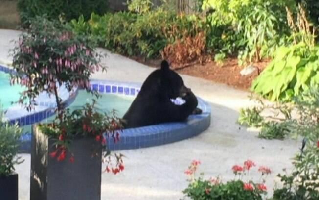 Os canadenses Denise e Tony Diering filmaram o animal entrando na piscina deles