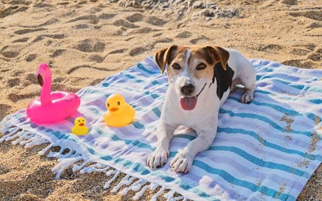 O dono não deve usar protetor solar de humanos no cachorro, isso pode prejudicar ele