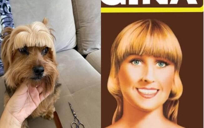 Cão tem franja cortada e é comparado com mulher de propaganda famosa