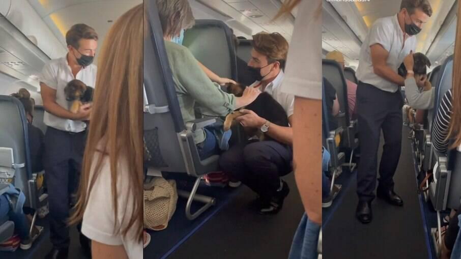 O comissário de bordo levou o filhote de Pastor Alemão para que os passageiros acariciassem o animal e se distraíssem do medo