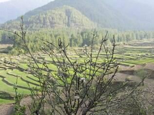 Nas proximidades de Paro, são encontradas extensas plantações de arroz