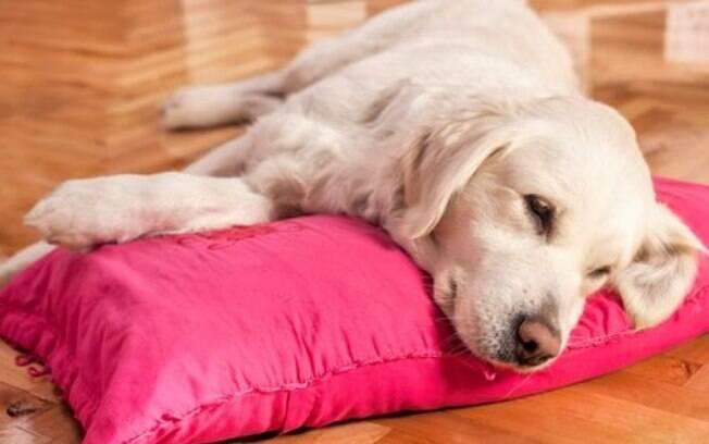 Existem muitas causas para um cachorro vomitando amarelo