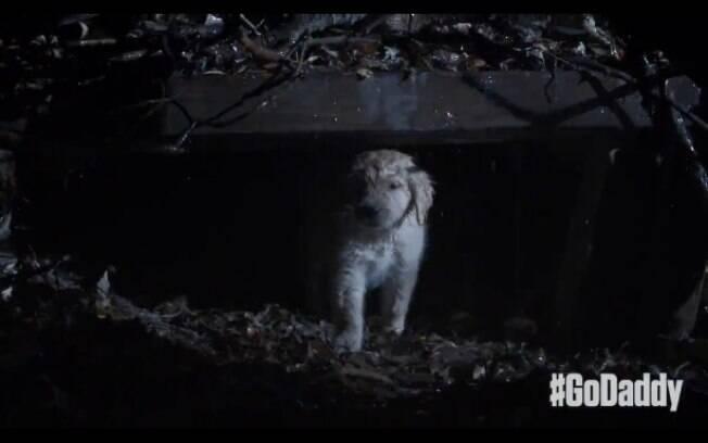 Em um anúncio da GoDaddy para o Super Bowl um filhote de cachorro cai de uma caminhonete e enfrenta vários obstáculos para voltar para a casa (janeiro de 2015). Foto: Reprodução