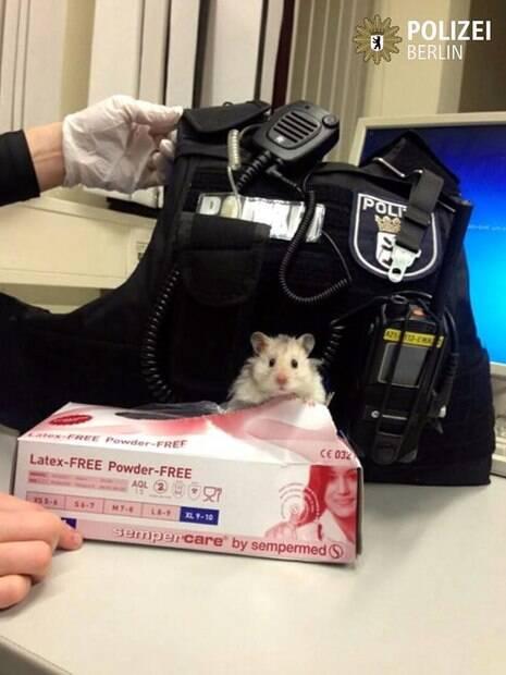 Policiais acham hamster abandonado e ele ajuda a combater o crime
