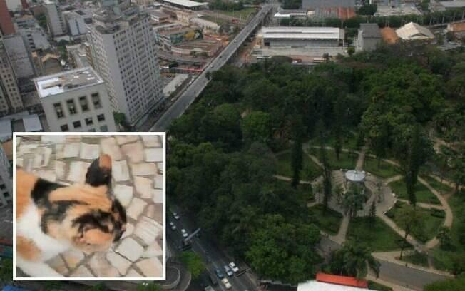 Frida vivia no parque há aproximadamente cinco anos.
