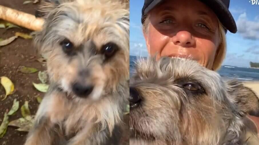 Cachorro que ficou cinco anos amarrado agora pode correr pela praia