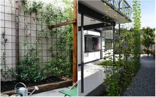 Com arames e trepadeiras, é possível criar um jardim vertical mesmo sem montá-lo junto a uma parede