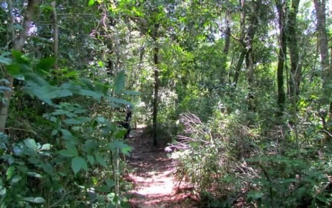 As plantas que conseguem absorver metais pesados crescem devagar e são ameaçadas pelo desmatamento (foto ilustrativa)