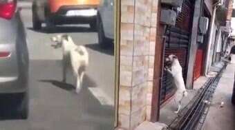 Cão é abandonado em avenida e segue donos de volta para casa