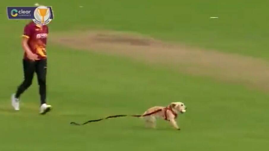 Cachorro invade campo e rouba a bola da partida