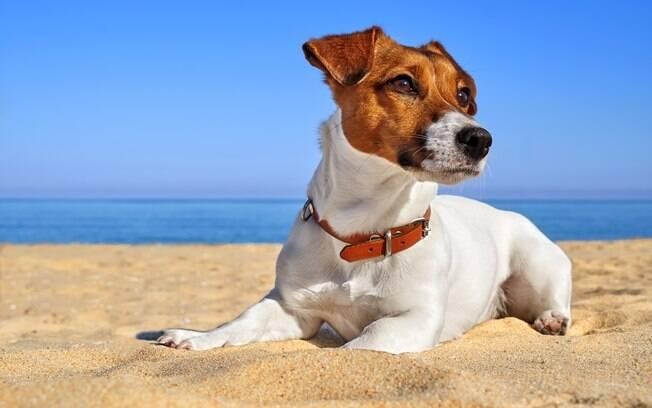 Você conhece as raças de cães mais dramáticas? Confira as lista com os seis primeiros