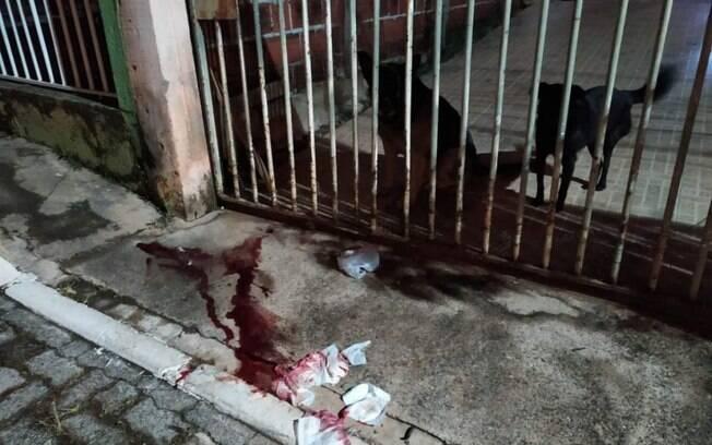 O agressor deu dois golpes com a barra de ferro na cabeça do cachorro e foi embora.
