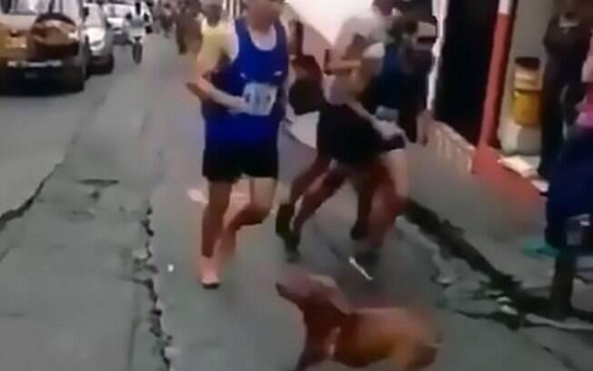 Corredor chuta cachorro durante competição