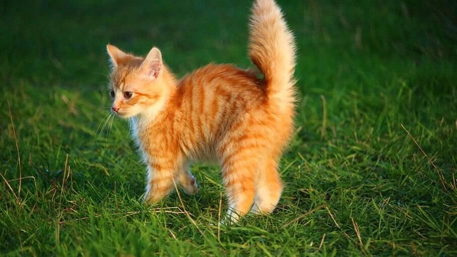 As pessoas costumam escolher nomes para gatos de acordo com a aparência ou com o temperamento do bichano