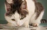 Gato vomitando? Confira o que fazer e os possíveis motivos