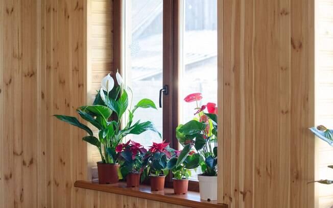 Plantas merecem cuidados especial no inverno